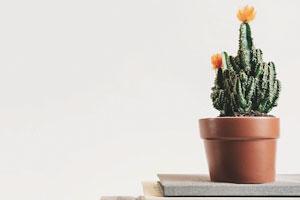 psychotherapie-kaktus-mit-gelber-bluete