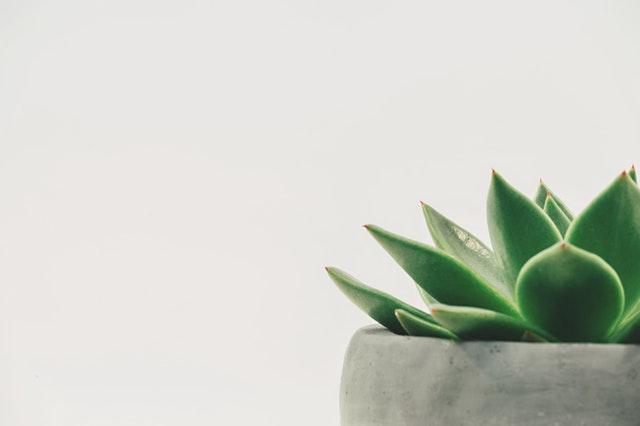 gruener-kaktus-verhaltenstherapie-anerkannt